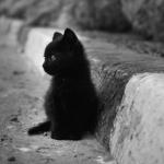 black cute cat ♥