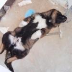 kutyak_0522.JPG