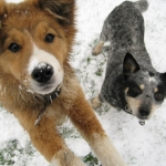 Dogs in Snow.jpg