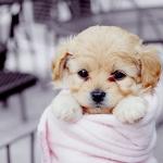 cute-dog-puppy-sleep-sweet-Favim.com-447561_large.jpg