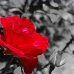 virág.jpg