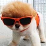 cool-dog-395x500.jpg