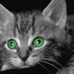 Cica <3