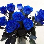 kék rózsa 2.jpg