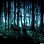 mysterious_forest-wallpaper-1280x1024.jpg