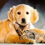macskás és kutyás képek.jpg