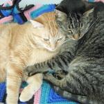 Mickey & Andy Nov 2008.jpg