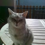 Szöszi cicám 2