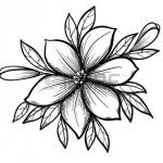 25041950-gyönyörű-grafika-rajz-lily-ág-levelei-és-bimbó-a-virágok-sok-hasonlóságot-mutat-a-szerző.jpg