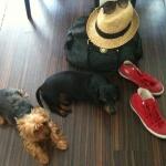 kutyáim♥  :)