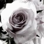 Black_And_White (1).jpg