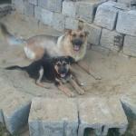 Kutyáim :)