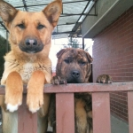 Kutyáim
