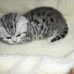 Aranyos kiscica.