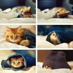 cat-saturday-214_large.jpg