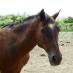 Horse♥Kemír