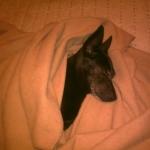 Ladykém 2012-01-05 001.jpg