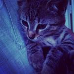 macskám, mr Darcy