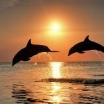delfin_dolphin35.jpg