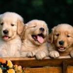 cuki-kutyusok.jpg