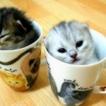 édibédi cica!.jpg