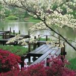travel_lago_nature_outdoors_pretty_photography-28d6f54943549eea496cecb2f1ec585c_h_thumb.jpg