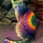 színes macska.jpg
