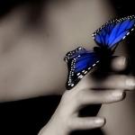 az élet pillangója..:)