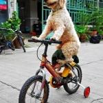 lol bicikliző kutya