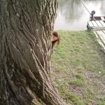 Fa mögött a Duna parton