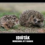 idióták.jpg