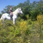 My horse:)