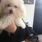 Kicsi kutyám