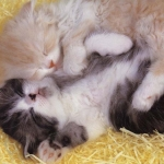 álmos cicák.jpg