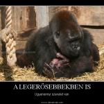1323287633_8-gorilla3-f.jpg