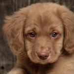 kutyas-kepek_24.jpg
