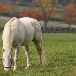 Szürke ló.jpg