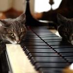 zongora2.jpg