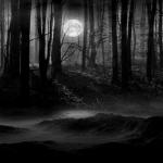 sötét-erdő.jpg