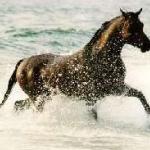 Ló mánia.jpg