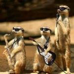 World's Most Funniest Animals Photos (14).jpg