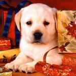 karacsonyi_kutya56.jpg