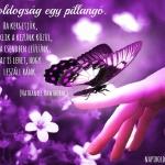 Pillangó-idézet.jpg