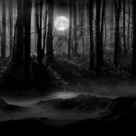 a-sotet-erdoben-in-the-dark-forest-.jpg
