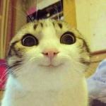 crazy cat.jpg