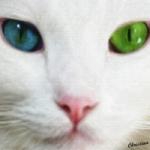 fehér cica.jpg