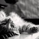 music-cat.jpg