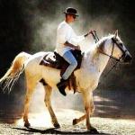 Barna herceg,fehér lovon.jpg