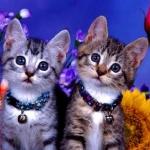macskák.jpg