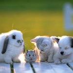 cica-kutya.jpg